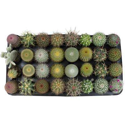 2.5 in. Cactus Collection Plant (32-Pack)