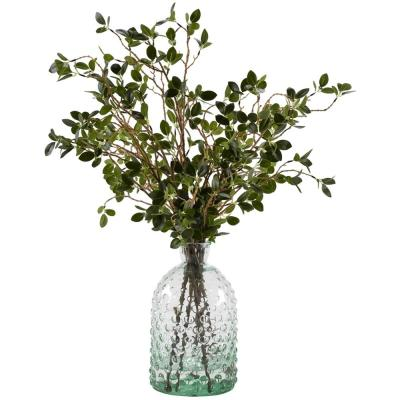 Indoor Bonsai Ficus Branches in Glass Bottle