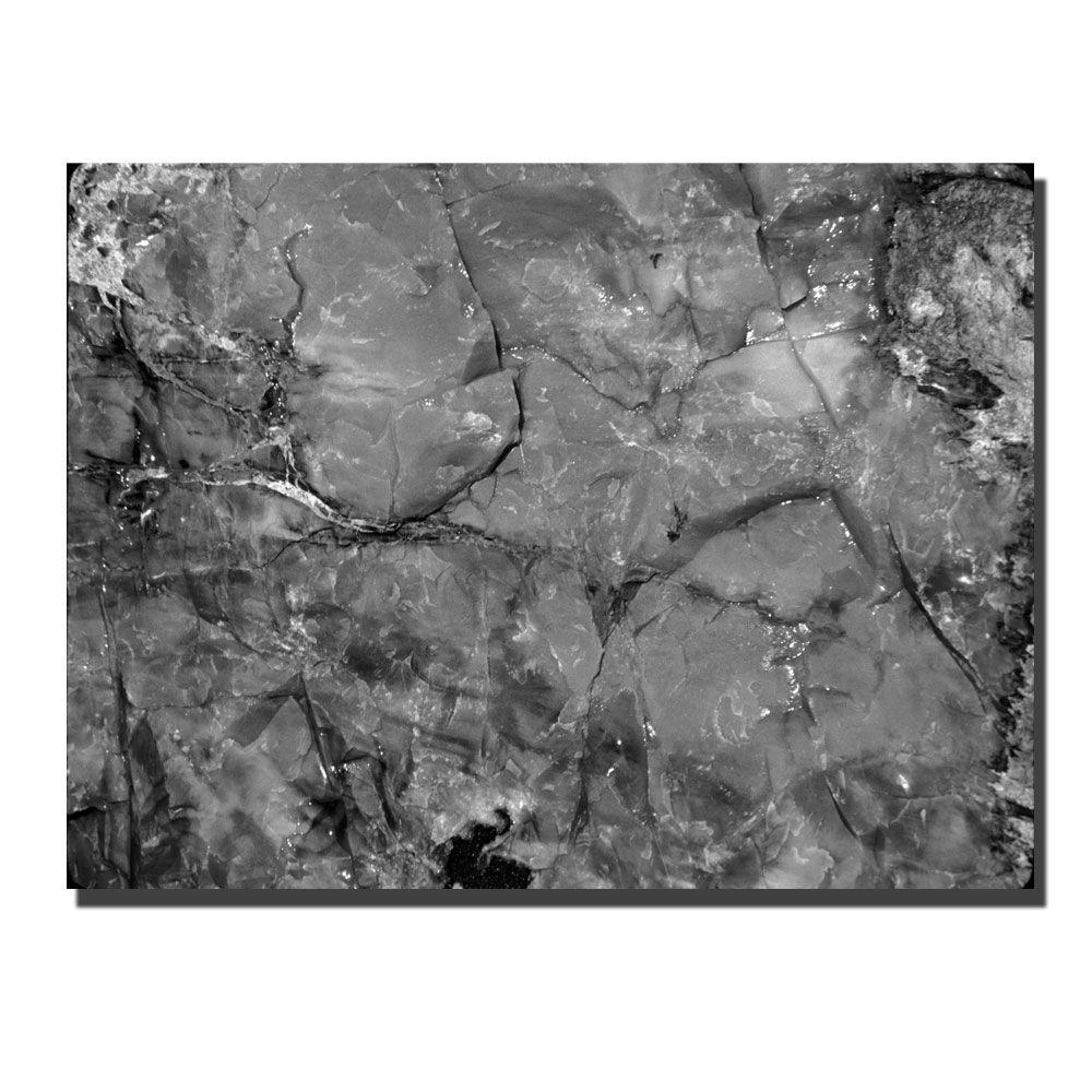 Trademark Fine Art 24 in. x 32 in. Petrified Abstract Canvas Art