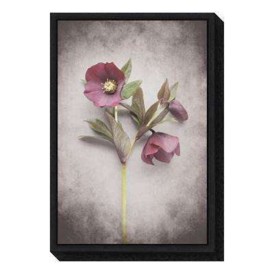 """Vintage Hellebore Study V"" by Felicity Bradley Framed Canvas Wall Art"
