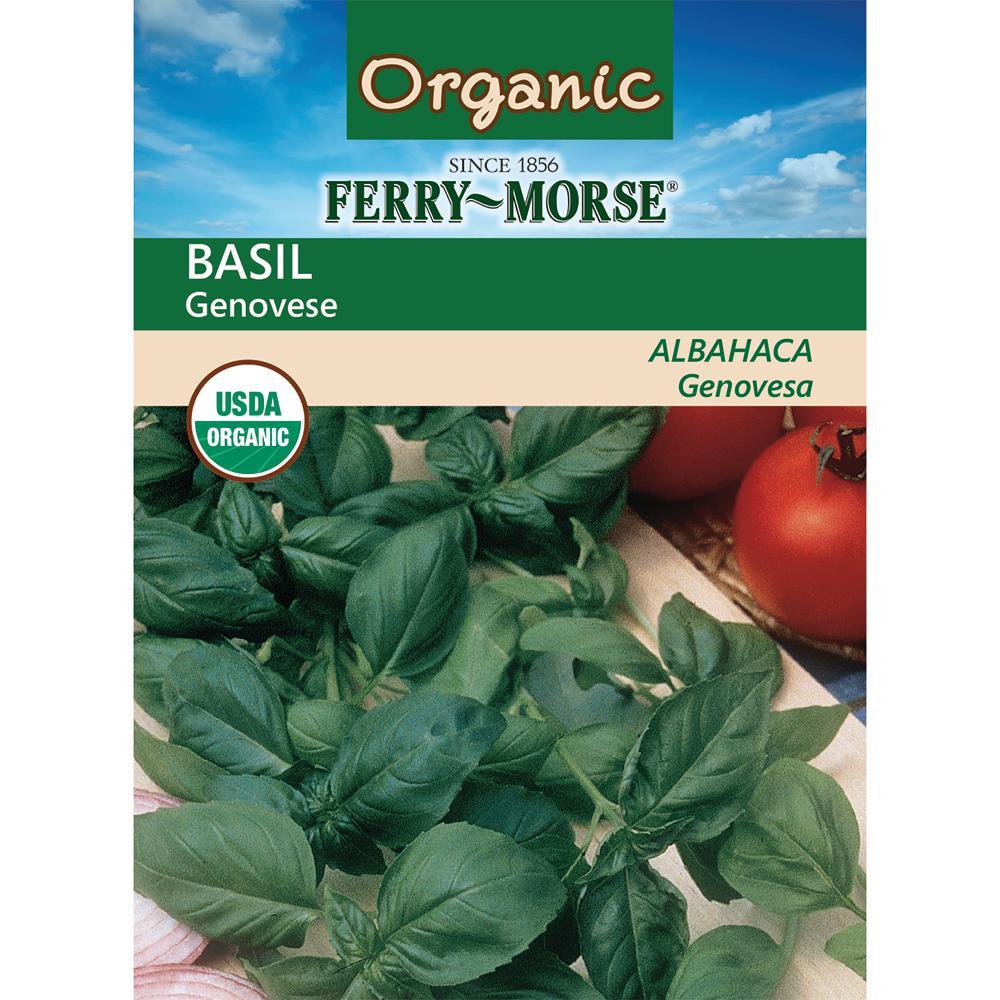 Basil Genovese Organic Seed