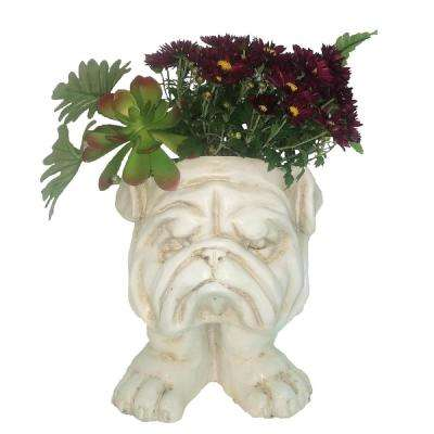 9 in. Antique White Bulldog Muggly Mascot Animal Statue Planter Holds 3 in. Pot