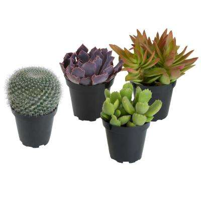 3.5 in. Assorted Cactus and Succulent Plants (3-Pack + 1 Free)
