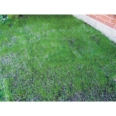 18 in. x 48 in. Turf Alive (R) III Lawn Seed Mat with Rhizomes