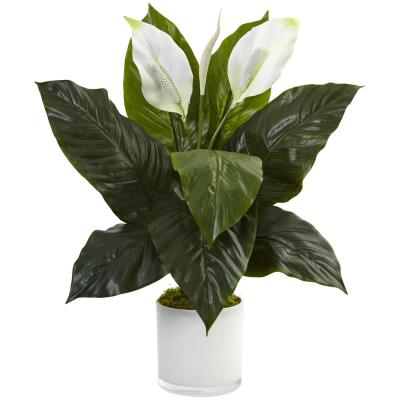 Indoor Spathiphyllum Artificial Flowering Peace Lily in Glossy Glass Planter