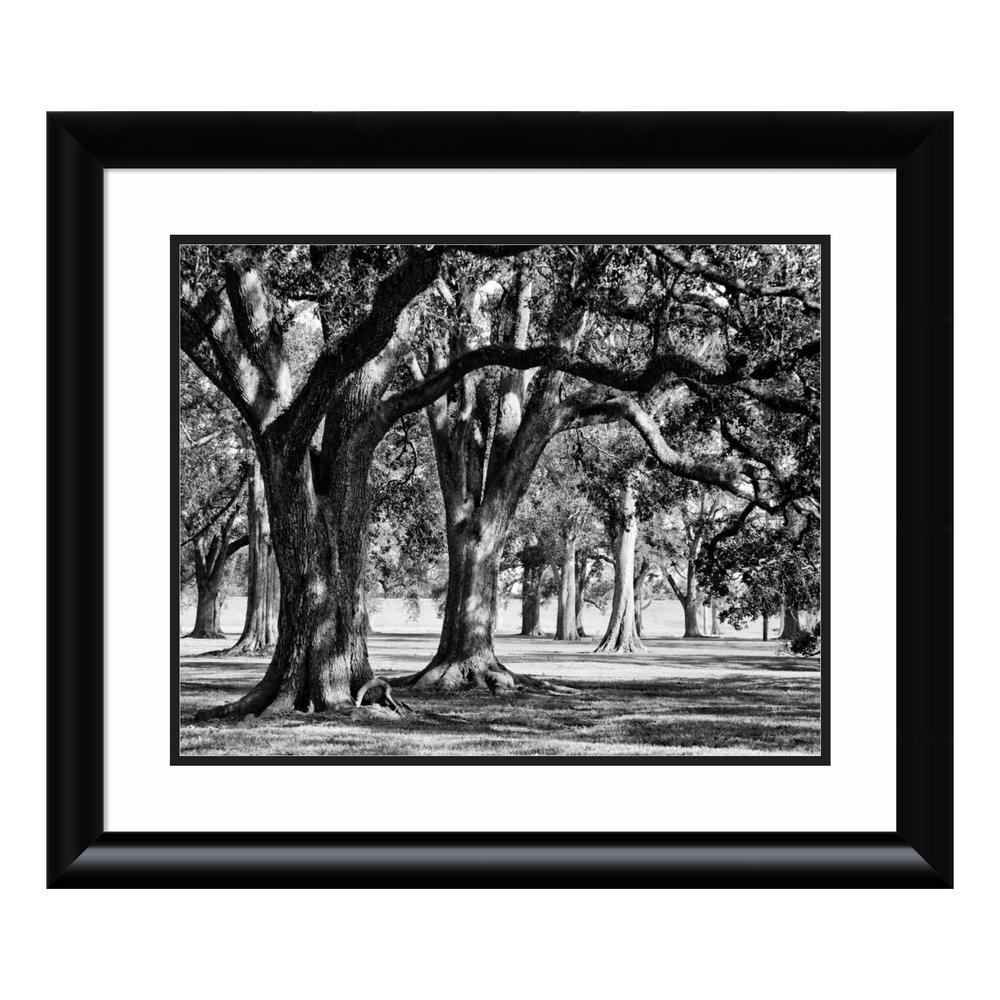"""""""Oak Grove II"""" by Jeff/Boyce Maihara/Watt Framed Wall Art"""