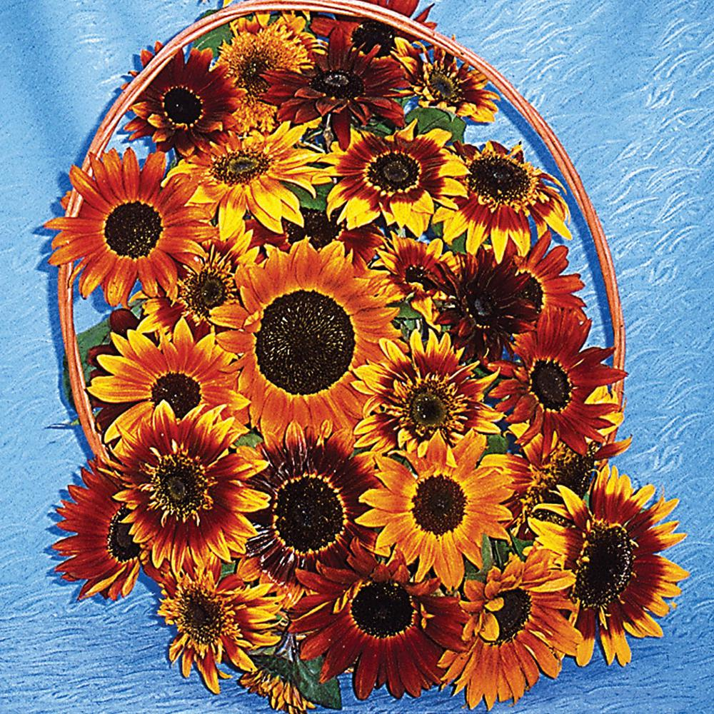 Gurney's Sunflower Royal Flush Flowering Seed Mixture (25 Seed Packet)