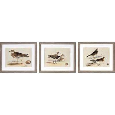 22 in. x 18 in. Coastal Birds Printed Framed Wall Art (Set of 3)