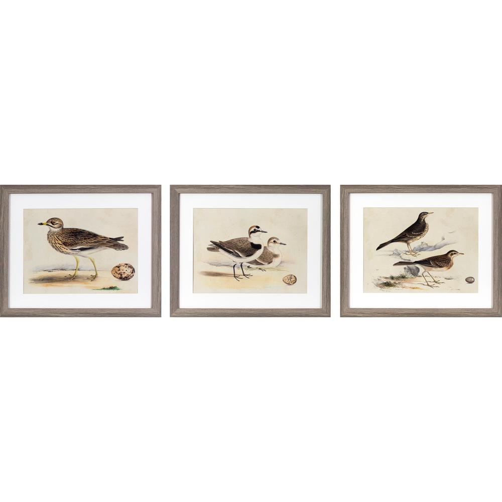 22 in. x 18 in. Coastal Birds Printed Framed Wall Art