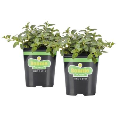 19.3 oz. Peppermint (2-Pack Live Plants)