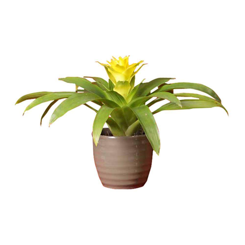 aloe vera plant kona hawaii home depot 10 signs you 39 re. Black Bedroom Furniture Sets. Home Design Ideas