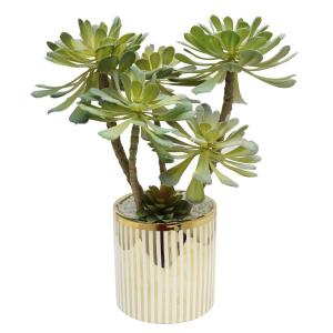 A & B Home Potted Succulent Stem in Polka Dot Vase Green ... Green And Gold House Plant on green and purple plant, strawberry begonia plant, green with yellow flowers ground cover, coprosma mirror plant, hardy banana plant, black and gold plant, foam flower plant, twin leaf plant, malawi gold plant, green leafy plants, eastern smooth beardtongue plant, fly poison plant, coprosma marble queen plant, green cordyline plants, coleonema sunset gold plant, green and white grass plant, green plants with flowers, sundrops plant, florida gold plant, emerald and gold plant,