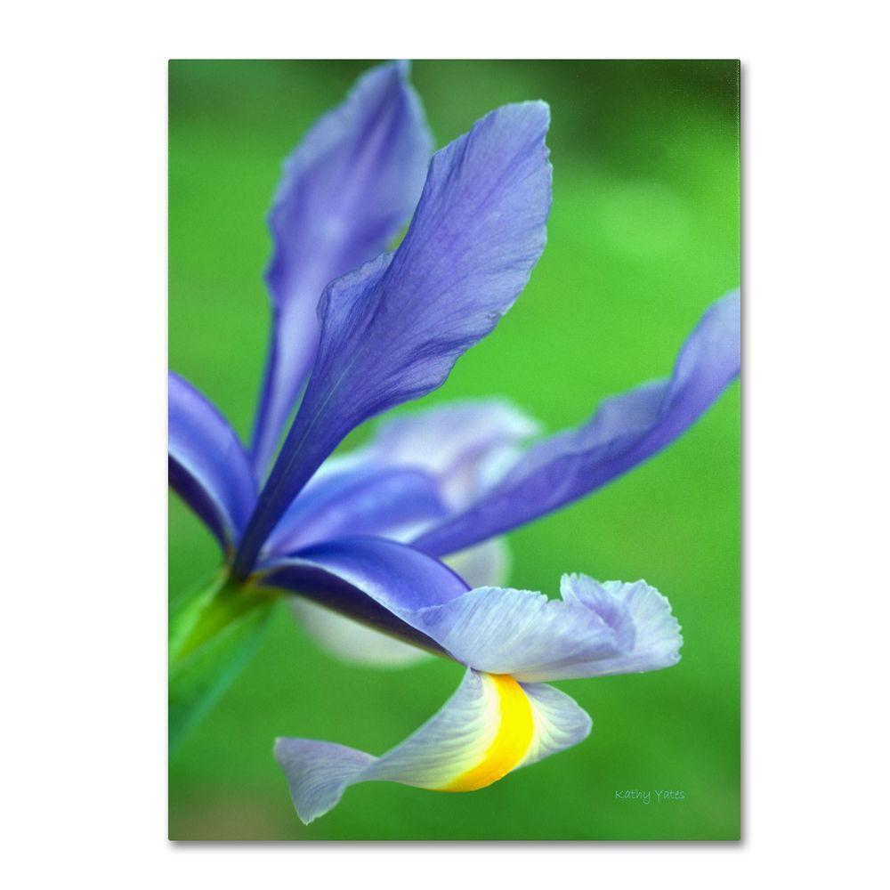 14 In X 19 In Spring Iris Canvas Art Ky0034 C1419gg