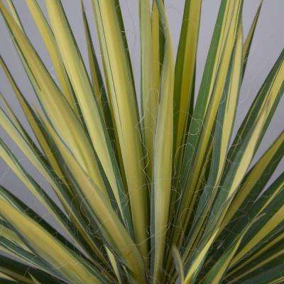 2 Gal. Color Guard Yucca(Adam's Needle), Live Plant, Unique Variegated Blade-Shaped Foliage