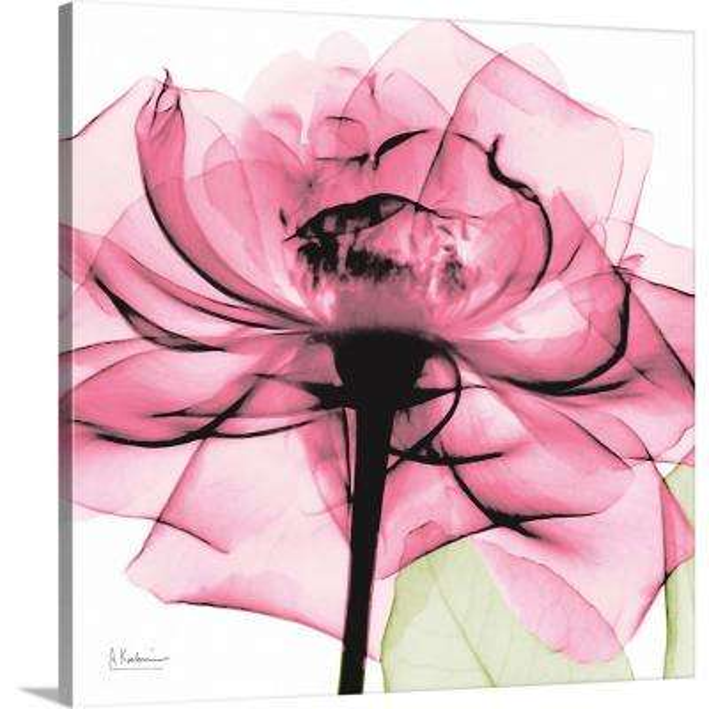 """Pink Rose x-ray photography"" by  Albert Koetsier Canvas Wall Art"