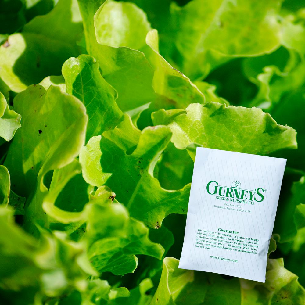 800 pcs Lactuca sativa Green leaf salad seeds Vegetable