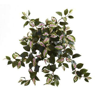 21 in. Hoya Hanging Bush (Set of 4)