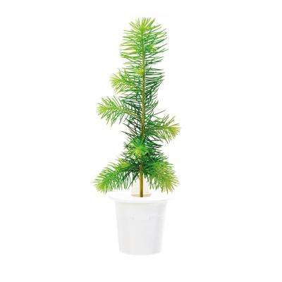 Spruce Refill (3-Pack) for Smart Herb Garden
