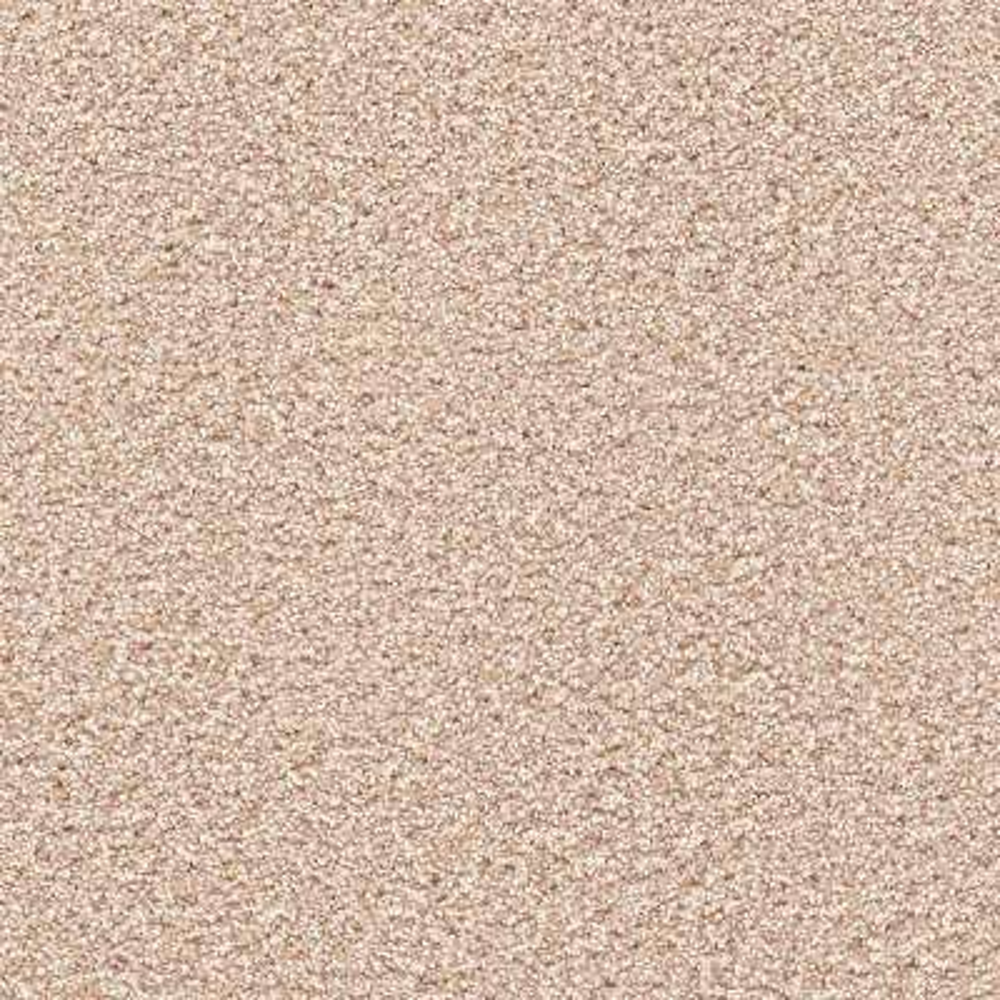 Carpet Sample - Elite I - Color Oxford Texture 8 in. x 8 in.