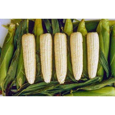 Sweet Corn Silver Queen Hybrid (250 Seed Packet)