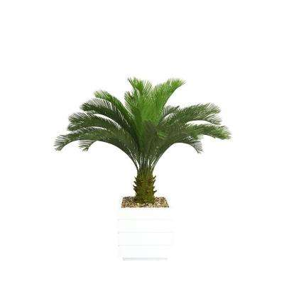 54 in. Tall Cycas Palm Tree in 14 in. Fiberstone Planter