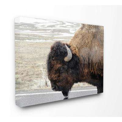 "30 in. x 40 in. ""Beautiful Buffalo Photography"" by In House Art Printed Canvas Wall Art"