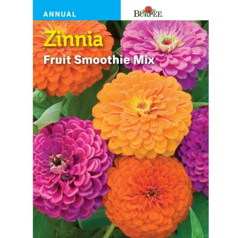 Zinnia Fruit Smoothie Seed