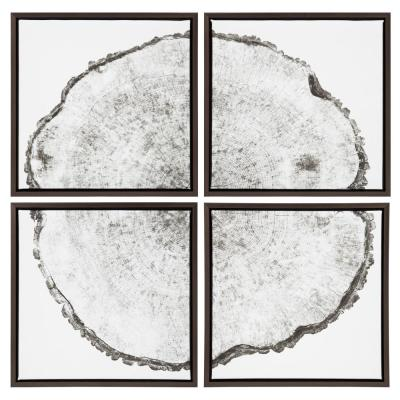"""Sylvie """"Tree Rings"""" by F2Images Framed Canvas Wall Art, Set of 4"""