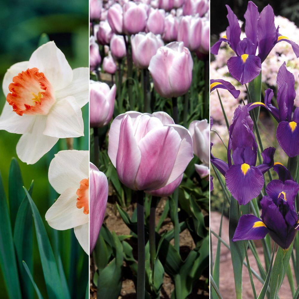 Spring Blooms Bulb Collection Dormant Bulbs (38-Pack)