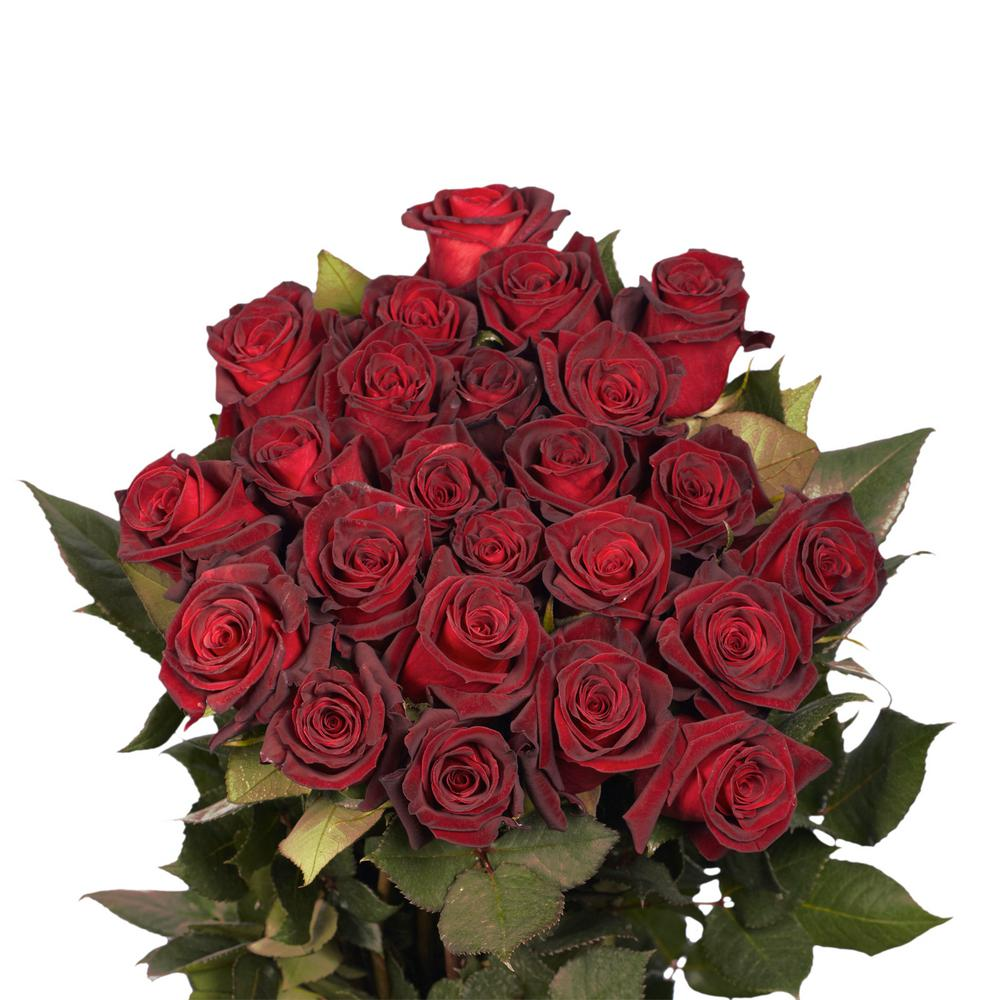 Globalrose fresh black baccara dark red color roses 250 stems globalrose fresh black baccara dark red color roses 250 stems izmirmasajfo