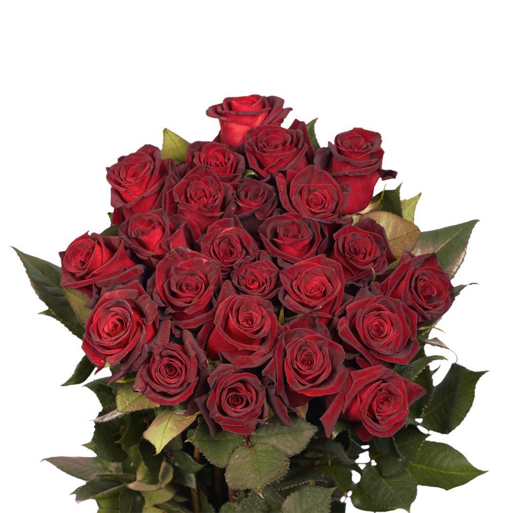 Fresh Black Baccara Dark Red Color Roses (250 Stems)