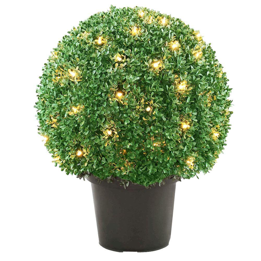 Mini Tree With Lights Part - 39: Mini Boxwood Ball Shaped Topiary Tree With 70 Clear Lights-LBXM4-302-22 -  The Home Depot