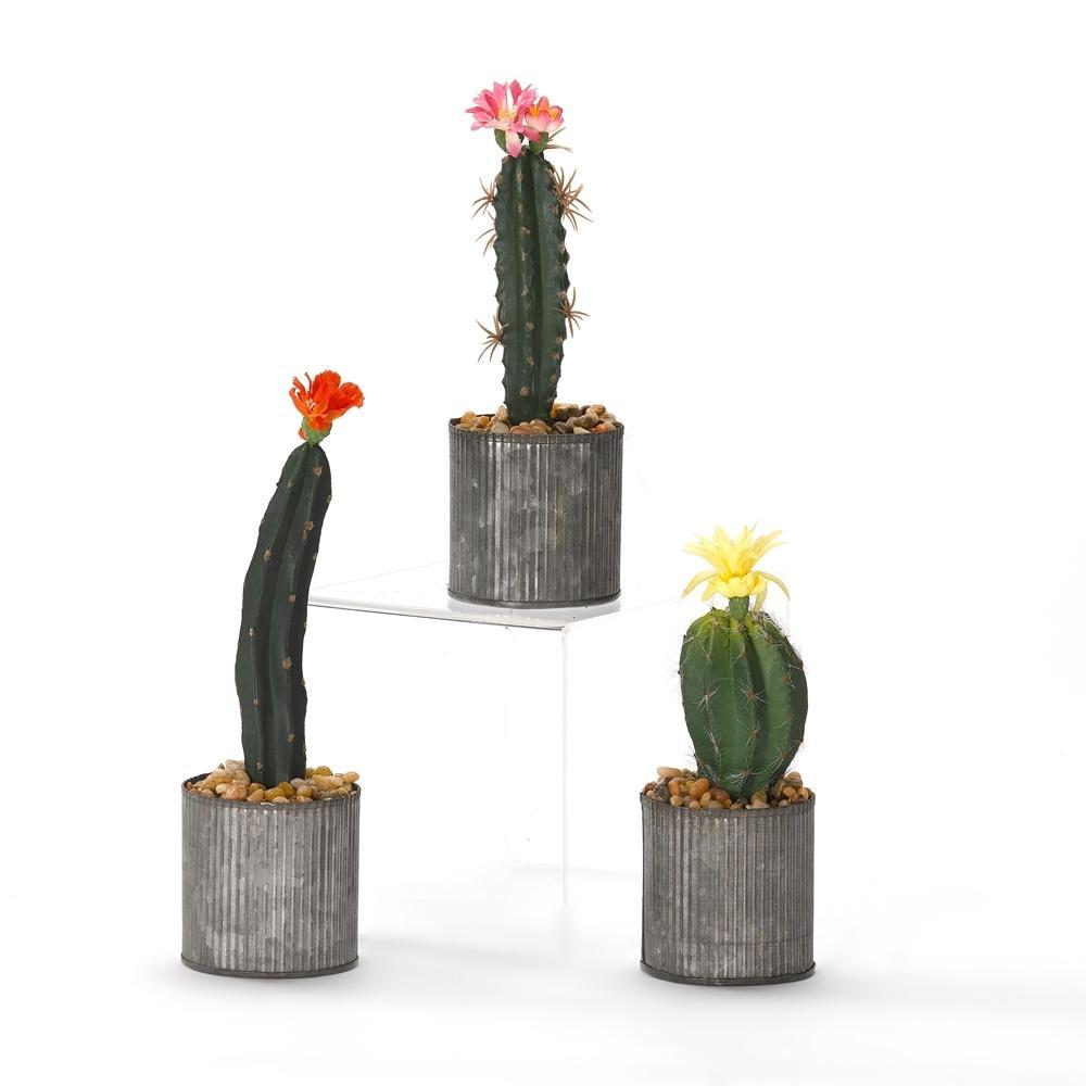 Indoor Assorted Cactus in Round Tin Planter (Set of 3)
