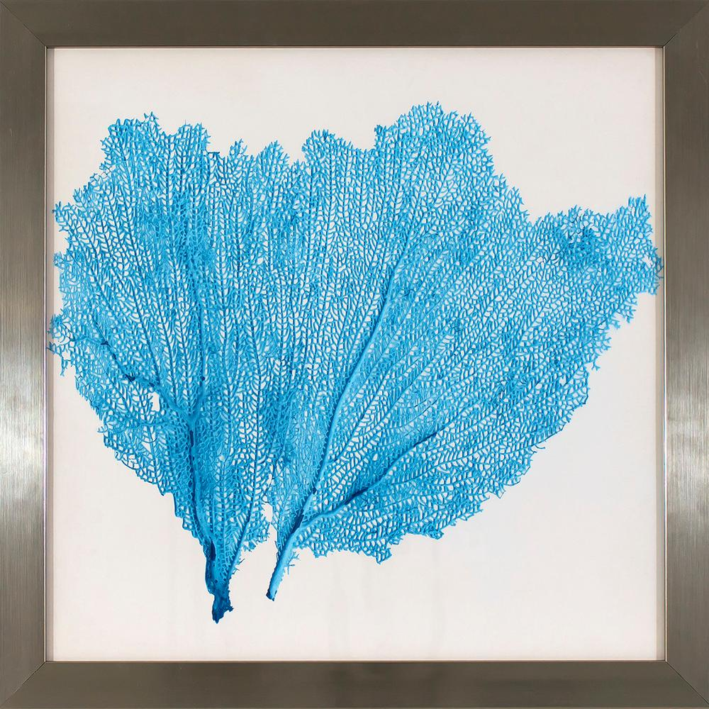 17.75 in. x 17.75 in. Blue Sea Fan Study Printed Framed