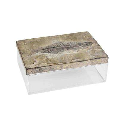 9.75 in. Resin/Acrylic Fossil Box