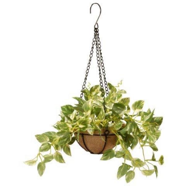 9 in. Pothos Plant Hanging Basket