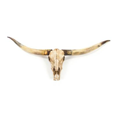 Resin Texas Long Horn Skull Wall Decor