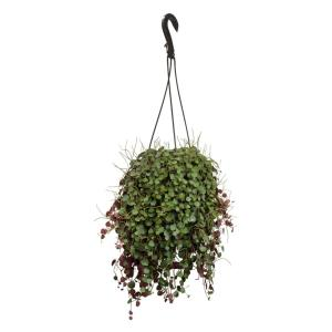 Altman Plants 6 In Peperomia Ruby Cascade Hanging Basket