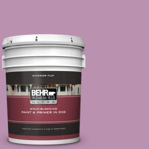 home decorators collection paint home depot behr premium plus ultra 5 gal home decorators collection 13465