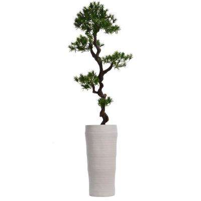 69 in. Tall Yacca Tree in Planter