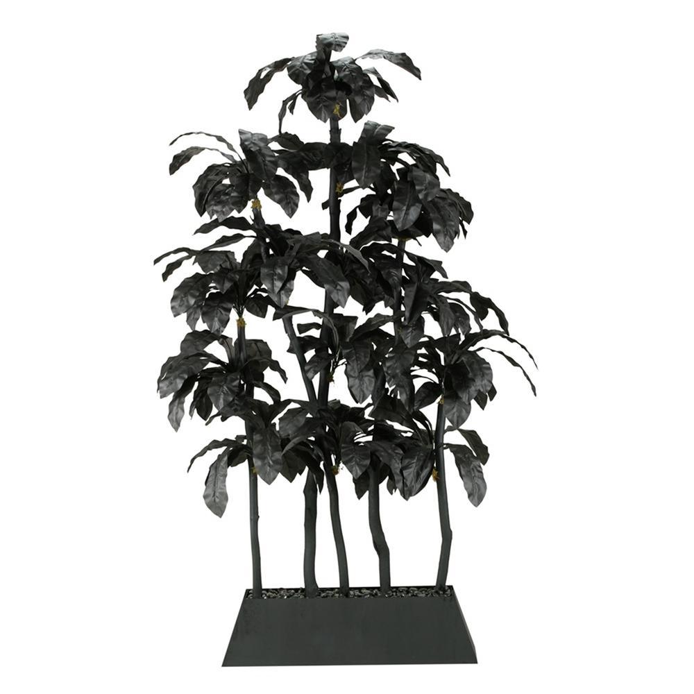 Indoor Black Birdnest Palm Screen in Rectangle Planter