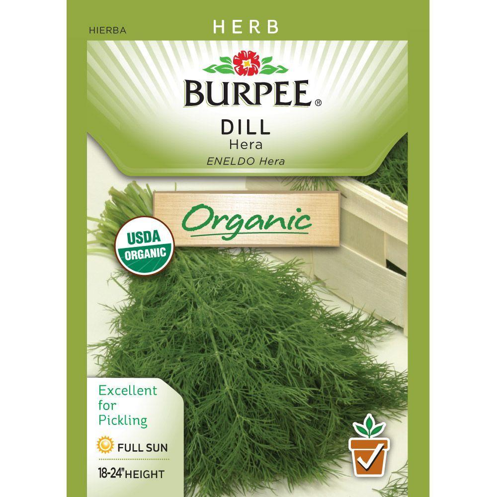 Dill Organic Herb Hera Seed