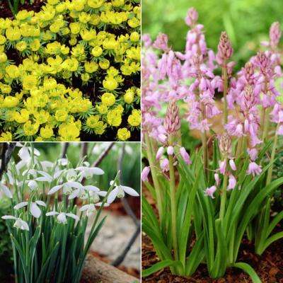 Pink, White, and Yellow Woodland Plant Collection of Bulbs (25-Pack)