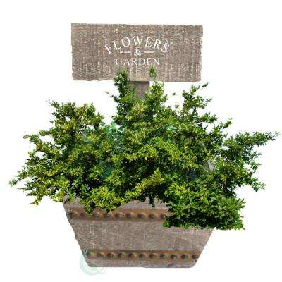 6.8 in. W x 7 in. D x 4 in. H Wood Welcome Planter Box