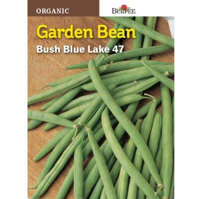 Bean Bush Blue Lake 47 Organic Seed