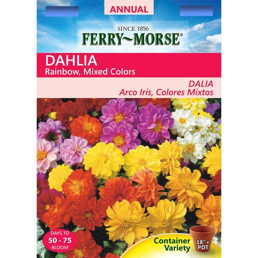 Ferry Morse Dahlia Rainbow Mixed Colors Seed 5582 The Home Depot