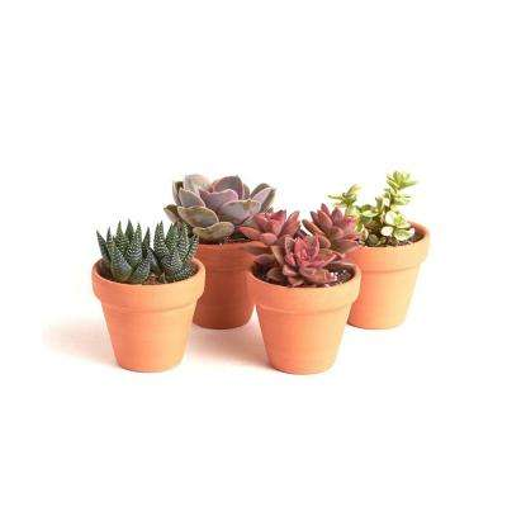 Terracotta Succulent (4-Pack)