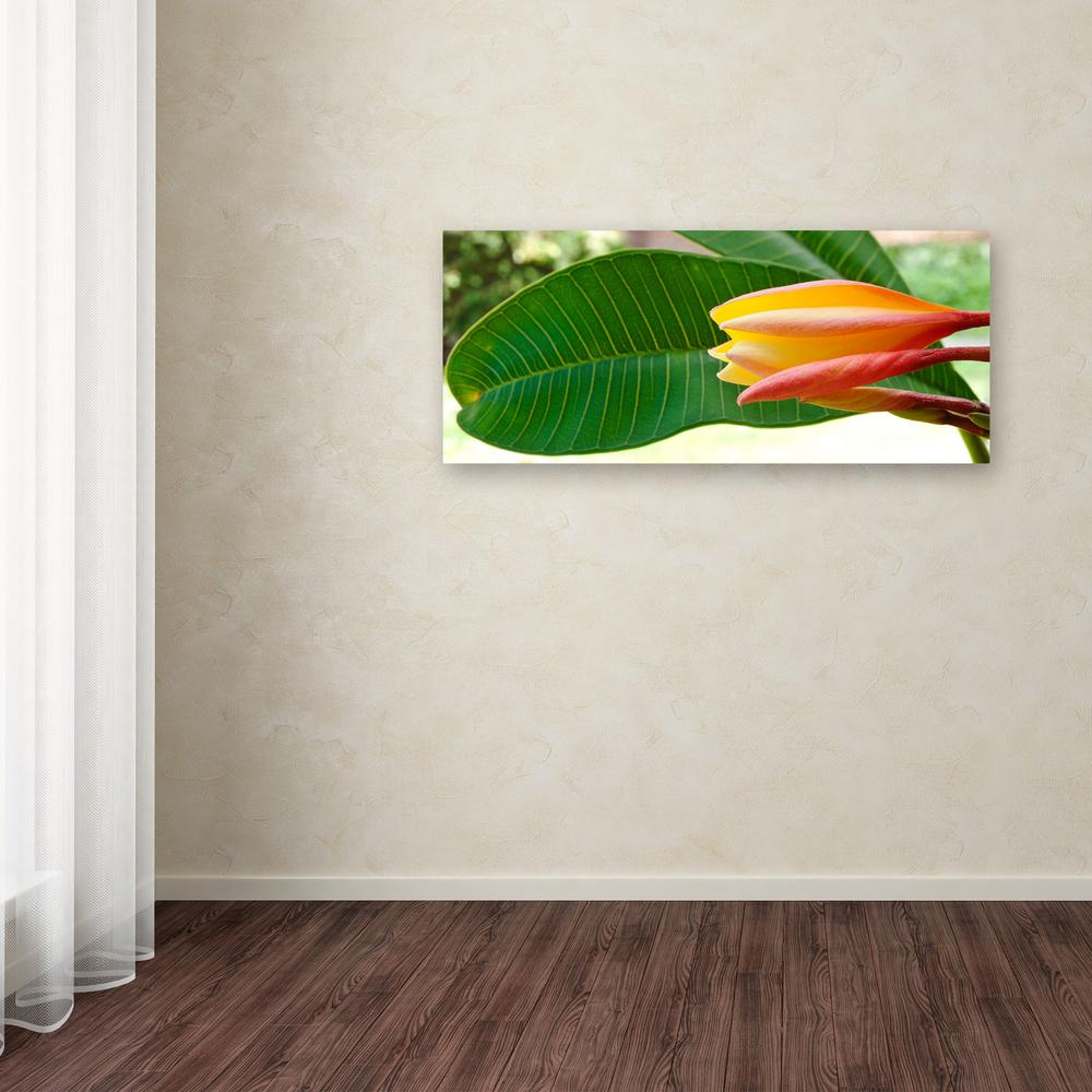 "Trademark 10 in. x 24 in. ""Plumeria Opening"" by Kurt Shaf..."