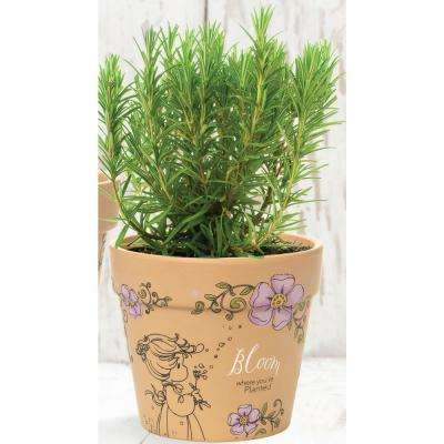 Bloom Where You're Planted 4 in. Dia Terra Cotta Small Pot