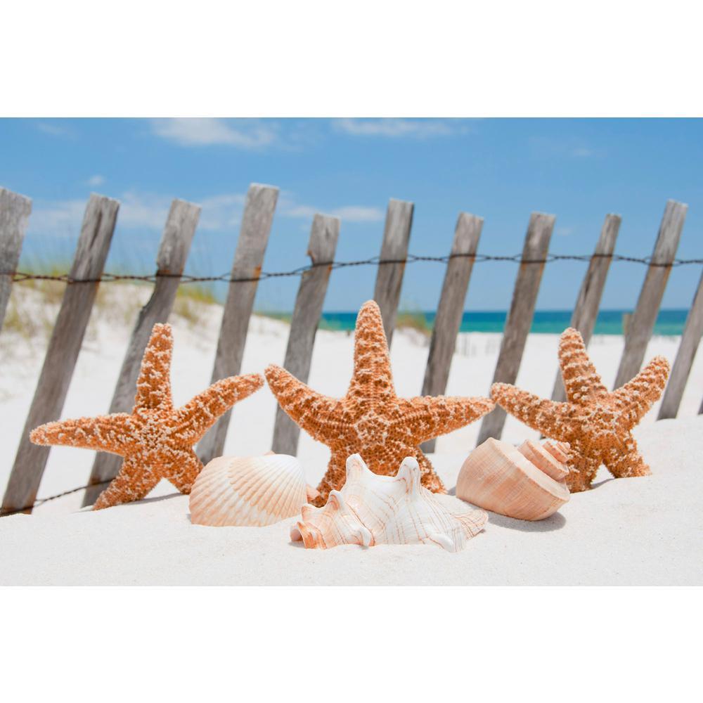 Photographic Starfish Animals Wall Mural